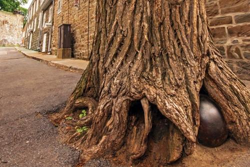 Magazine prestige l arbre au boulet de la rue saint for De l arbre au meuble